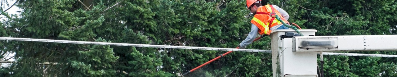 Lineman cutting down trees